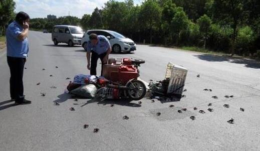 """男子驾""""三无""""摩托车撞倒老人 3天后投案自首"""